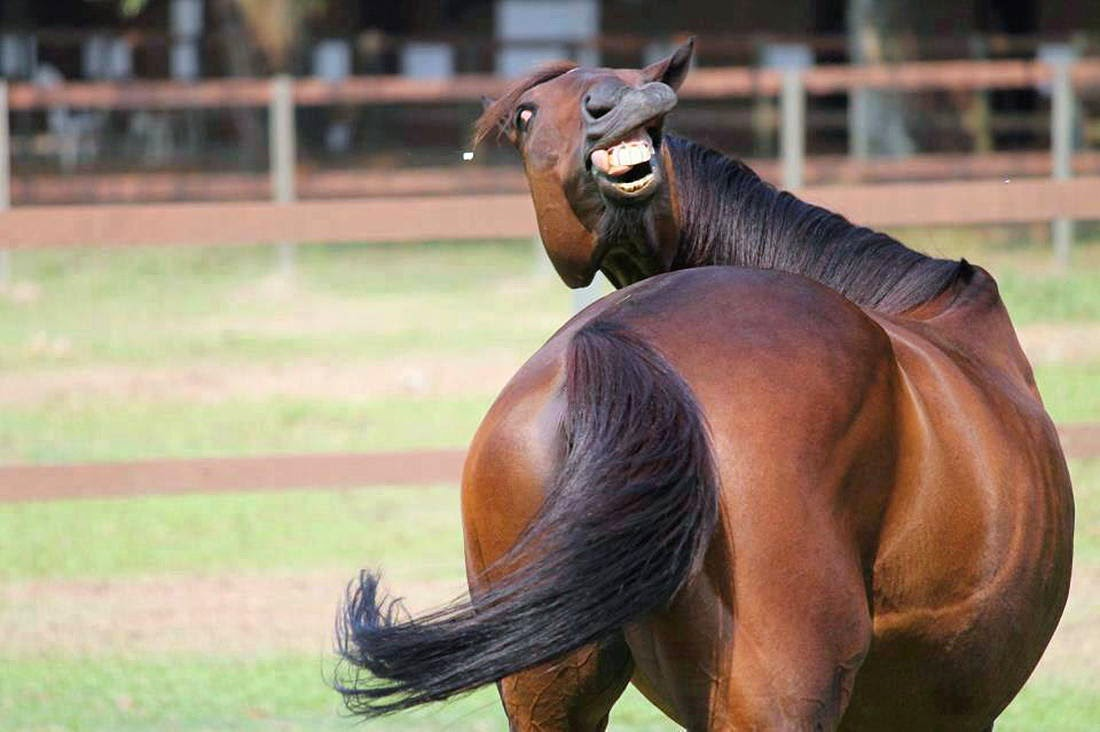 funny horse pictures - 1100×732